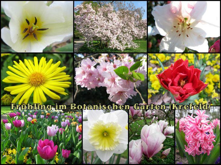 BotanischerGarten1