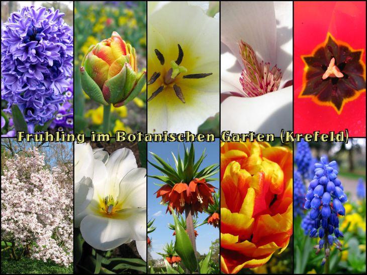 BotanischerGarten2