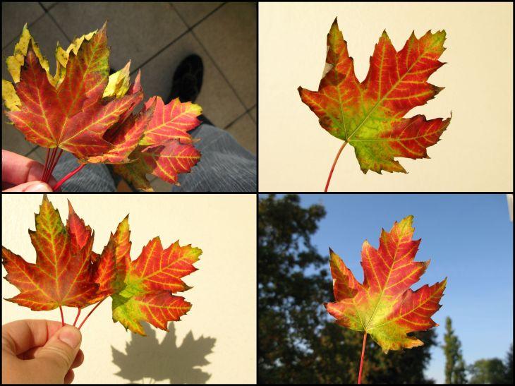 Herbst 2013_2