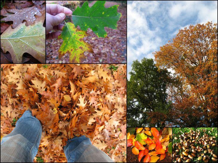 Herbst_4
