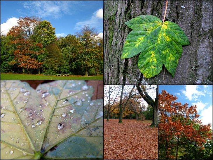Herbst_5