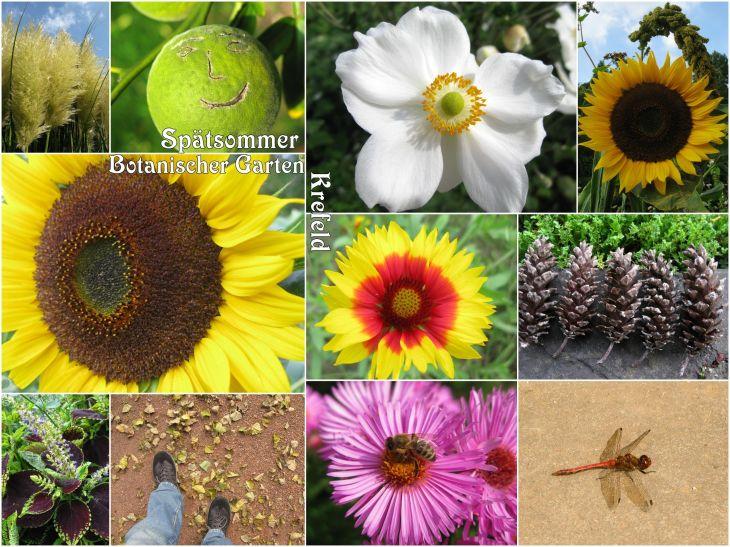BotanischerGartenKrefeld