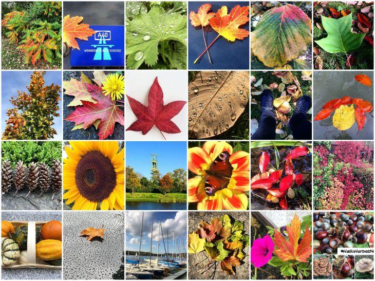 Instagram (Herbst)