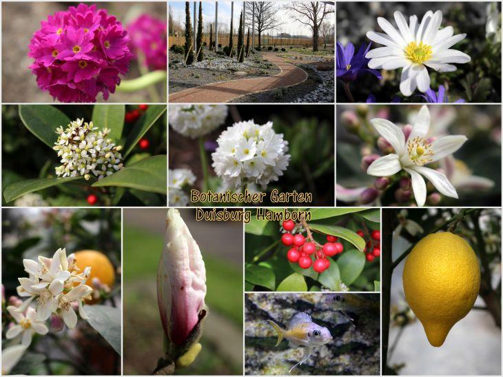 Botanischer Garten Hamborn