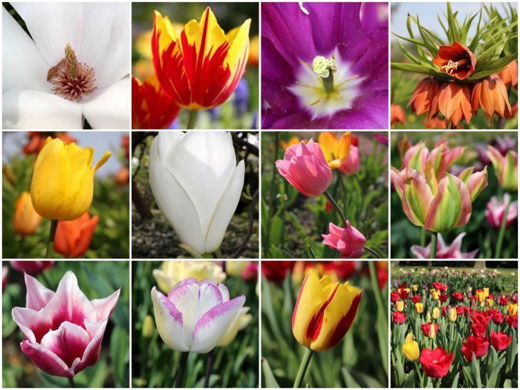 Frühling2015_1