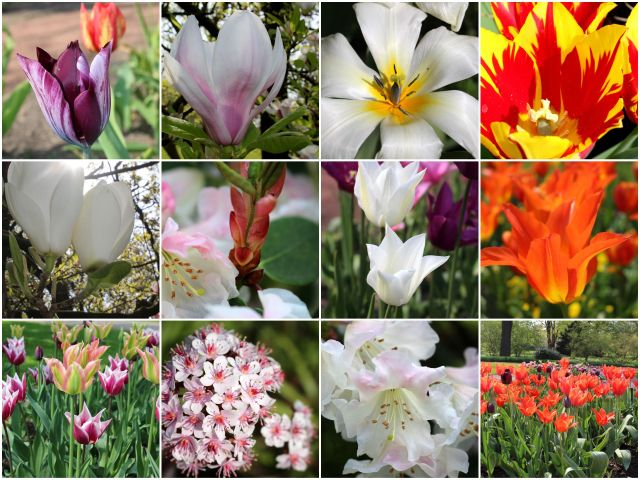 Frühling2015_2