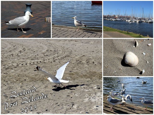 Urlaub 2015 (Zeeland)