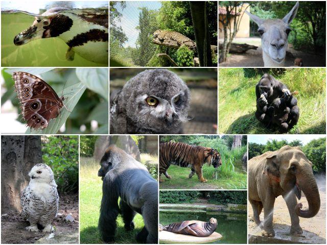 _Zoo2
