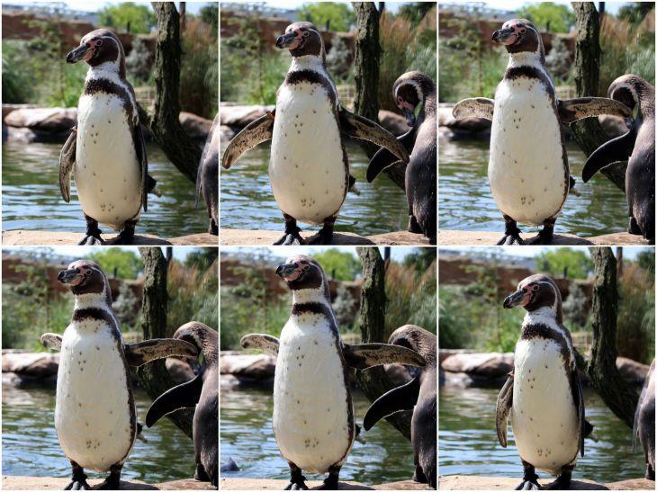 _Zoo3