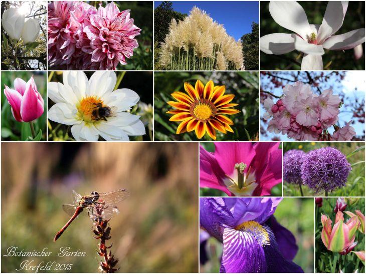 2015_Botanischer Garten