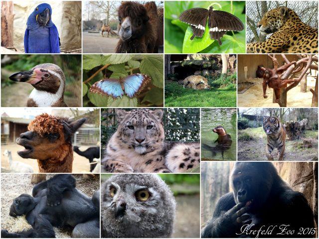 2015_Krefeld Zoo