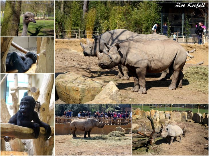 Zoo Krefeld (III)
