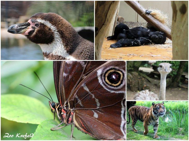 Zoo Krefeld (IV)