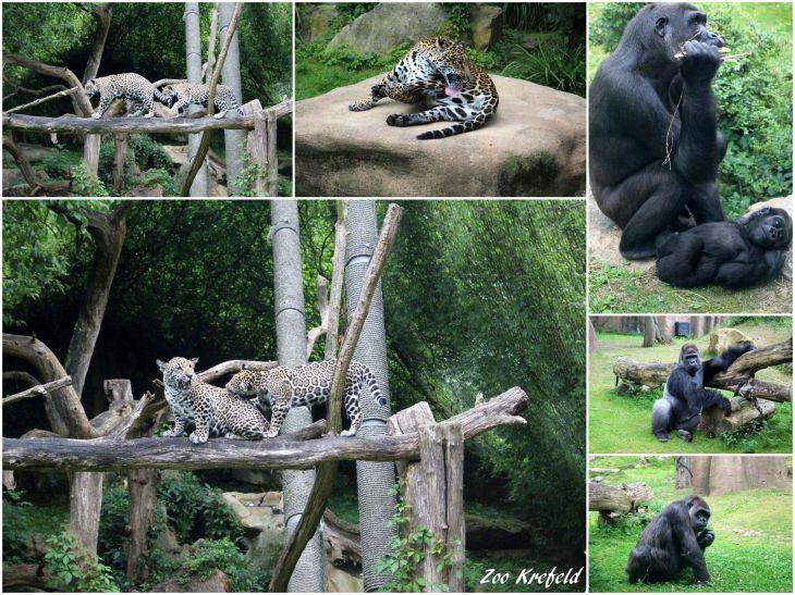 Zoo Krefeld (VI)