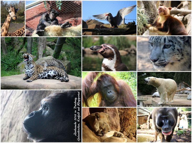 jahresrueckblick_2016_zoo